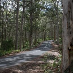 Karri Forest, Margaret River, Western Australia