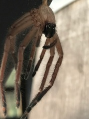the carcass of a spider, still anchored to the railing, swinging in the wind