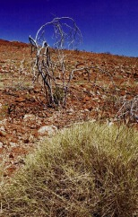 PilbaralandscapeI